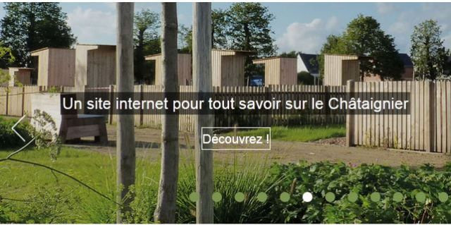 site web chataignier
